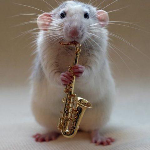 2020 é o Ano do Rato