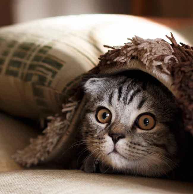 Taiwan - Vila dos gatos de Houtong